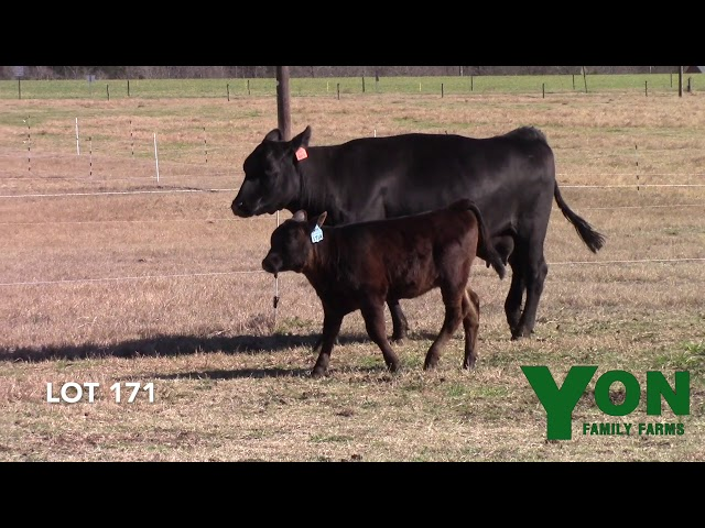 Yon Family Farms Lot 171