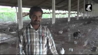 Rabbit farm Interview - (Telugu)