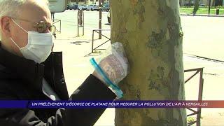 Yvelines | Un prélèvement d'écorce de platane pour mesurer la pollution de l'air à Versailles