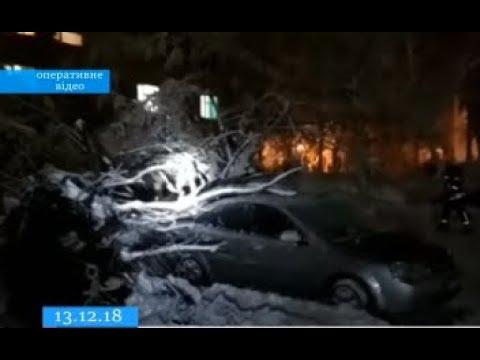 ТРК ВіККА: У Черкасах через сніжну навалу дерева падали на машини й дороги