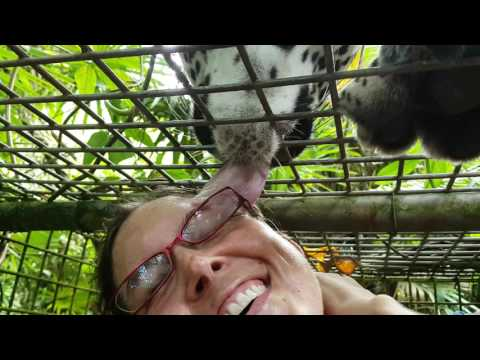 The animals of the Belize Zoo