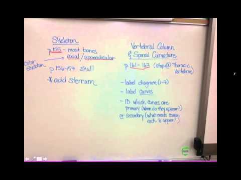Video 3 - Skeletal System - Skeleton Diagram Explanation