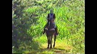 EM der ländlichen Reiter in Hooge Mierde (NL) 1997