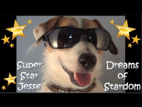 Super Star Dog Jesse Dreams of Stardom