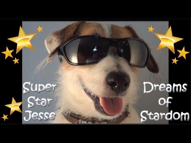 Super Star Dog Jesse Dreams of Stardom