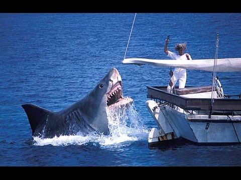 Ce requin bouffe un un petit bateau youtube for Dans un petit bateau