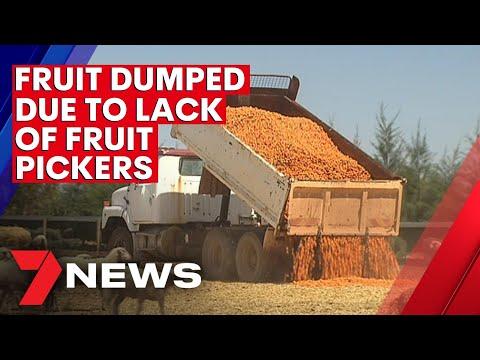 Fruit growers begin dumping fruit due to fruit picker shortage | 7NEWS