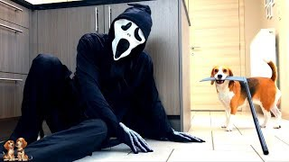 Dogs vs Ghostface Prank : Funny Dogs Louie and Marie