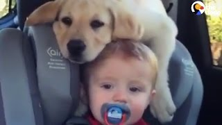 Puppy Rests His Head On His Baby's Head