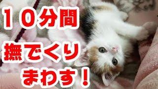 子猫がかわいすぎて10分間撫でくりまわしちゃう! thumbnail