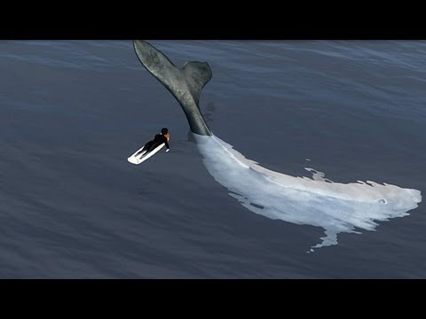 Whales jumping out of water next to surfer - photo#9