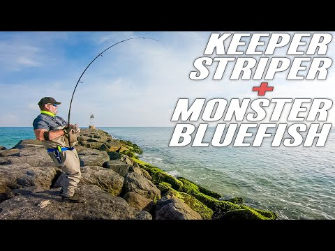 Keeper Striped Bass - BIGGEST BLUEFISH EVER - SURF FISHING - Long Island -  2020