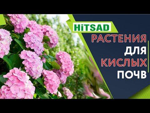 Растения которые ОЧЕНЬ Любят Кислые Почвы �� Цветы для кислой почвы �� Советы От Хитсад ТВ