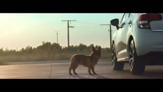 Citroën - Dog Stretching - TV