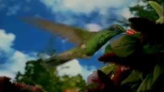 Подарок от фильма 'СЕКРЕТ'  Смотреть каждое утро!
