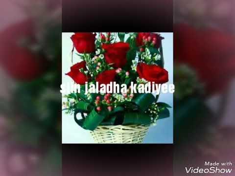Download Fayyesa furii