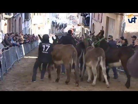 FESTA SANT ANTONI ASCÓ 2016: Corrides als clots i ball de vermut.