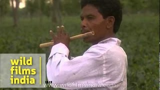 Local man from Assam plays flute in a tea garden