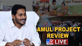 CM Jagan LIVE || Amul Project Review || Tadepalli - TV9