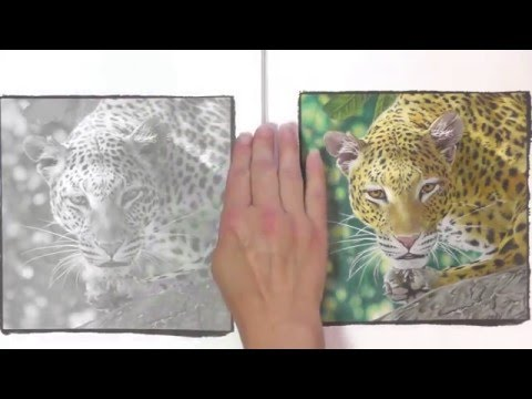 colouring-book-review-and-competition!-beautiful-creatures.