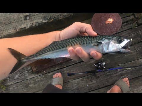 Mackerel Fishing Nova Scotia, Canada - Insane Action!