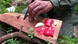 ป่า การปรุงอาหาร ธรรมชาติ การผจญภัย