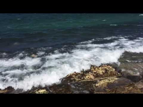 Sea Turtles grazing at Shipwreck Beach Lanai, Hawaii (October 2016)