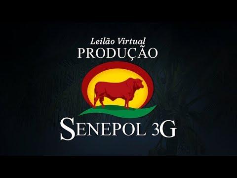 Lote 88   Sensual da 3G FIV   GGG 0303
