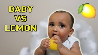 BABY VS LEMON!! **cute reaction**