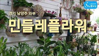 경기 남양주 와부 '민들레플라워' [꽃집…
