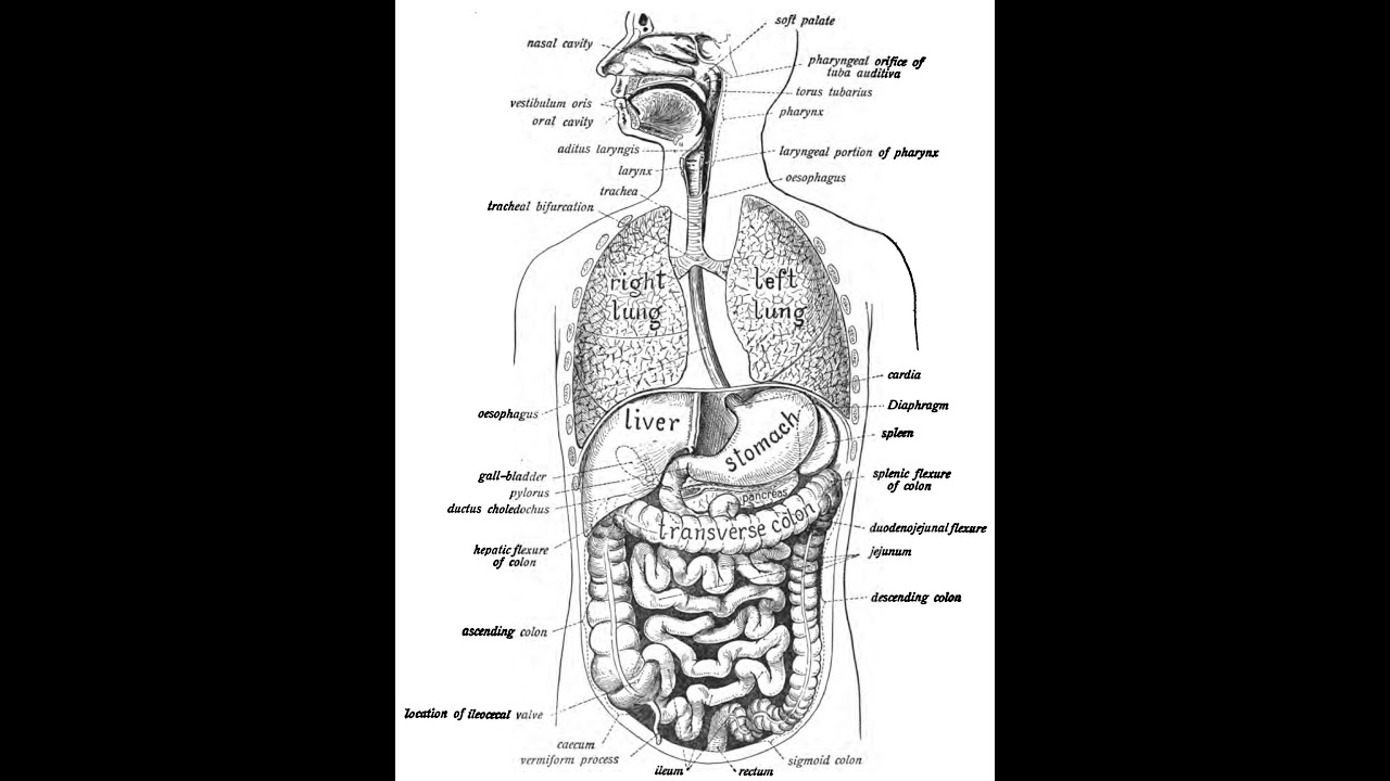 Episode _16 Digestive System Review - YouTube