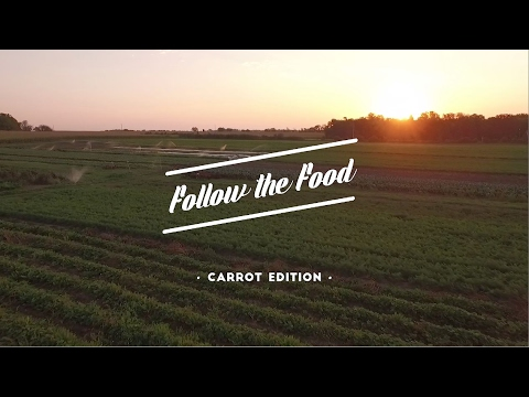 Follow That Food  Carrot Edition
