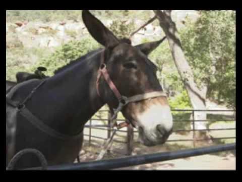 Mule skinner blues - José Feliciano
