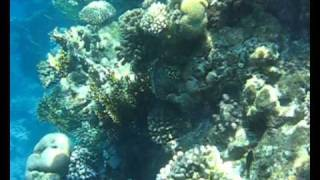 Red Sea, Egypt, Sharm El Sheikh, Красное море, Шарм Эль Шейх(, 2011-01-12T19:49:15.000Z)