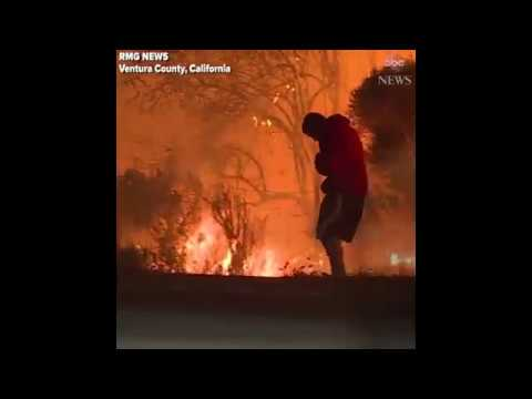 california fire - This Man tried to save wild rabbit 2017