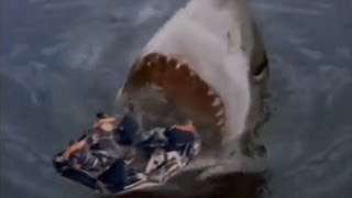 Shark Attack 3: Megalodon streaming