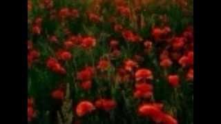 Dil Cheer Ke Dekh [Full Song] (HD) With Lyrics - Rang
