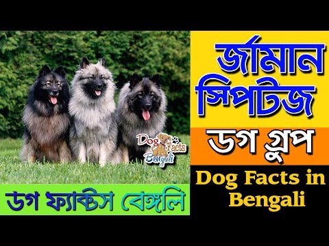 German Spitz Dog facts in Bengali | Small Dog Group | Dog Facts Bengali