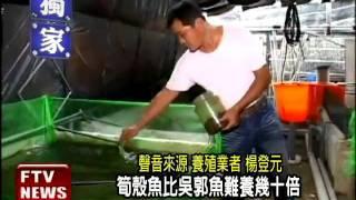 突破活餌餵養 筍殼魚養殖成功-民視新聞
