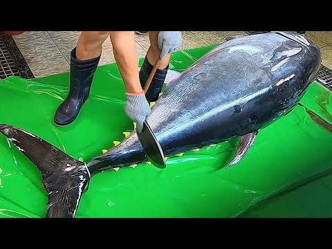 Knife Cuts 600lb Giant Bluefin Tuna like Butter