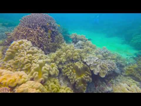 Apo Island - Philippines