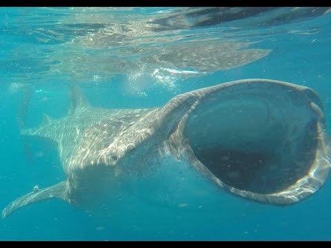 Daughter Eaten by Whale Shark - Ocean Tours