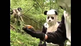 Play Spot the Panda - video