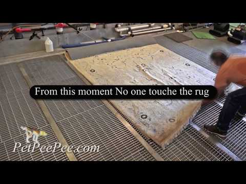 Cleaning oriental rug from urine odor Different