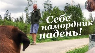 Случай на прогулке / Собака без намордника