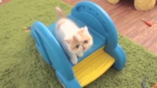 Забавные котята играют на горке / Funny kittens playing on the slide