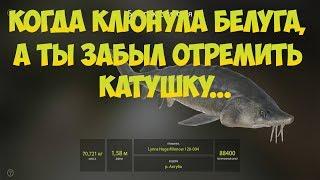 Русская Рыбалка 4: Когда клюнула белуга, а ты забыл отремить кату