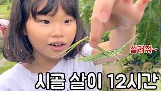 커다란 방아깨비를 잡았어요😱😱😱 라임이네 시골 일상 브이로그 I 카레 만들기와 돈까스 먹방 caught a big grasshopper | LimeTube
