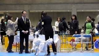 2009FCI東京インターブリード戦.