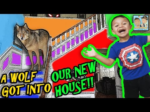 NEW HOUSE TOUR! WE FOUND AN ABANDONED HOUSE AND MOVED IN! A WILD ANIMAL GOT IN! DINGLE HOPPERZ VLOG!